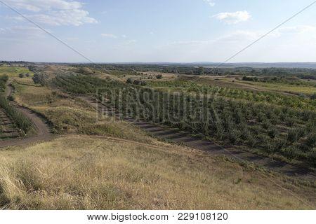 Summer Beautiful Rural Landscape. A Winding Dirt Track Road Through Hillside Landscape And An Orchar