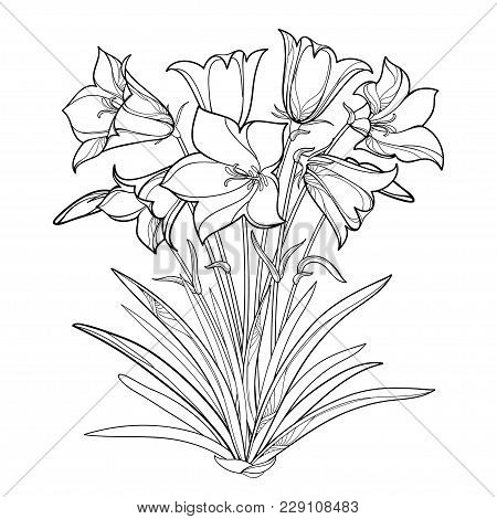 Vector Bouquet With Outline Alpine Campanula Flower Or Bellflower Of Alps, Bud And Ornate Leaf Isola