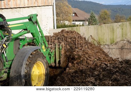Cow Dung Is Loaded With A Tractor - Close-up Bio Fertilizer