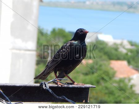 The Adult Starling Flew To The People And Sat On The Pole