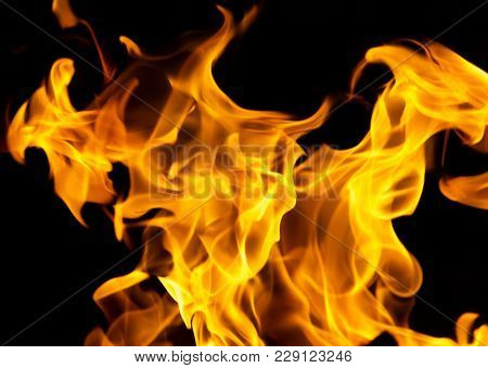Fire Flames On A Black Background . In The Park In Nature