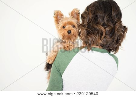 Closeup Portrait Of Young Woman Holding Yorkshire Terrier That Is Looking At Camera. Dog Concept. Is