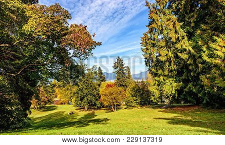 Summer Landscape, In A City Park On A Green Meadow Resting People On A Sunny Day, Around Large Trees