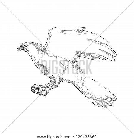Doodle Art Illustration Of Northern Goshawk, Accipiter Gentilis, A Medium-large Raptor In Family Acc