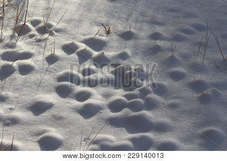 Dimples Of Snow Textured On Lake Shore
