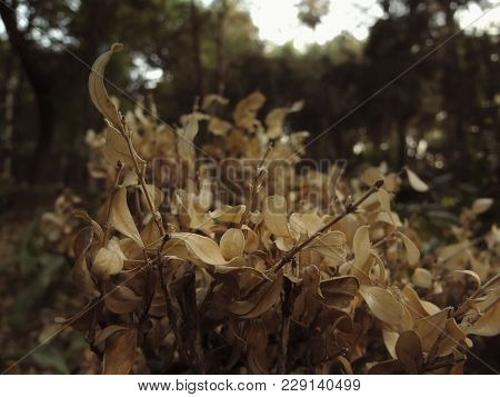 Withered and dry leaves with depth of field in
