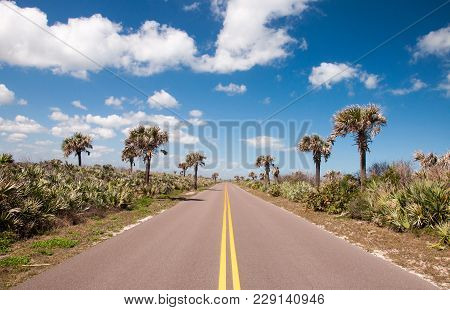 The Road Through Canaveral National Seashore In Florida.