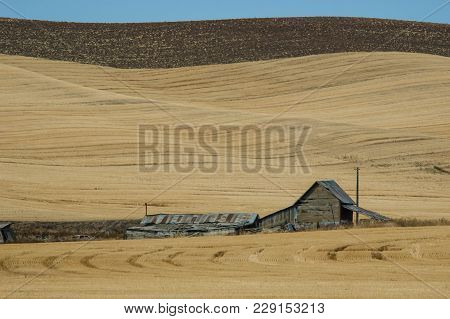 Aging, Abandoned Barn In Late Summer In The Palouse Region Of Washington