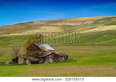 Farm Scene In The Palouse, Central Washington