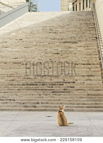 Yellow Cat Sitting On A Sun. Cat In The Street Of Valletta, Malta. Yellow Orange Kitten Relaxing On