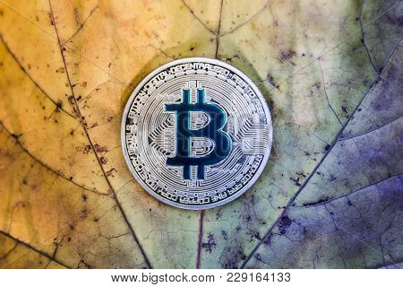 Bitcoin On A Fallen Autumn Leaf That Deteriorates, Concept Of Freezing And Stabilization Of Bitcoin
