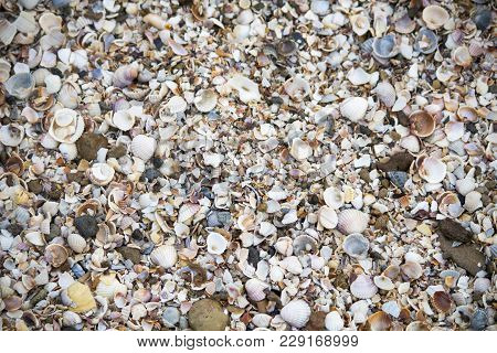 Seashells. Seashells Wallpaper. Seashells On The Shore