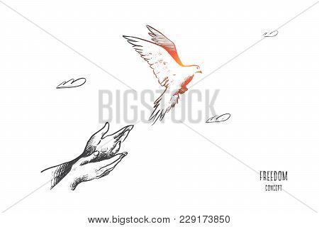 Freedom Concept. Hand Drawn Pigeon Flying Out Of Two Hands. Freedom Of Life, Free Bird Enjoying Natu