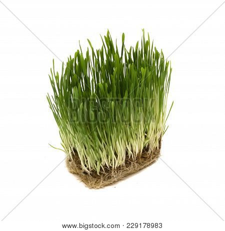 Green Grass With Dirt And Seeds Isolated On White Background. Oat Sprouts.