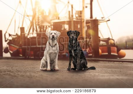 Two Cute Young Curious Dogs Pets Sitting And Looking Pretty In Front Of Sailing Boat During Holiday