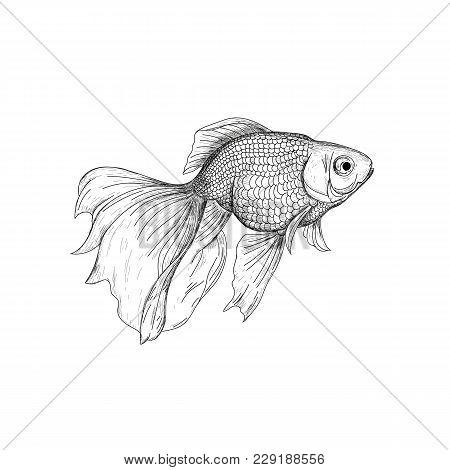 Goldfish line drawing - photo#45
