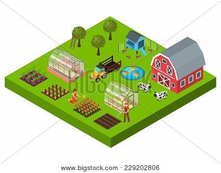 Isometric Concept With Big Farm Yard Vegetable And Flower Beds Cattle Greenhouse Barn 3d Vector Illu