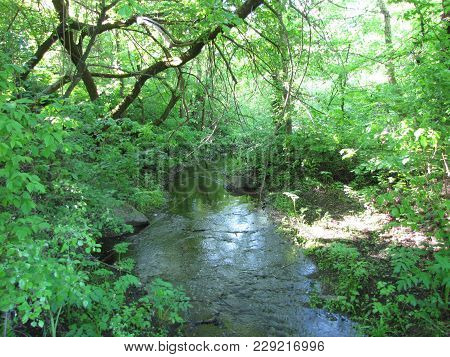 Walk Along The Spring Fun River, A Small Tributary Of The Great River