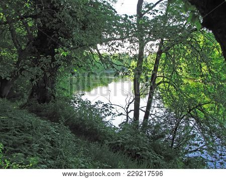 Trees Overhanging The River, A Walk Along The River Bank