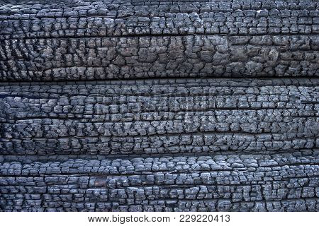 Burnt Logs Texture. Black Charred Wood Background