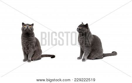 Cat With Yellow Eyes Isolated On A White Background. Horizontal Photo.