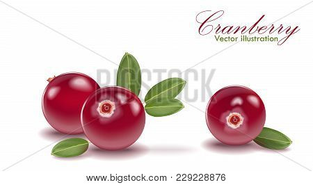 Red Tasty Cranberry Set With Leaf On Isolated White Background. Cranberries For Juice, Pudding, Smoo
