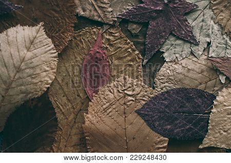 Fallen Autumn Leaves Background. Colorful  Leaves Background And Texture For Design. Close Up View O
