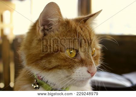 Cropped Shot Of A Red Cat. Cat Looking To The Side. Cat Close-up Over Blurred Background. Ginger Cat