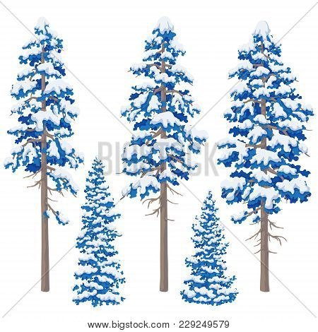Blue Pine Trees Isolated On White Backgrouund. Set Of Conifers. Winter Snowcovered Trees. Vector Fla
