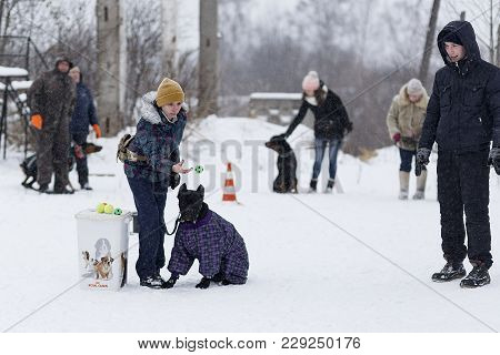 Russia Ivanovo 24 December 2017, People Train Their Dogs, Dog Walking, Editorial