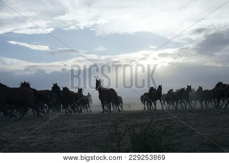 A Plain With Beautiful Horses In Sunny Summer Day In Turkey. Herd Of Thoroughbred Horses. Horse Herd