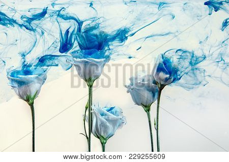White Poses Inside In Water On A White Background. Flowers Is Under The Water With Acrylic Blue Pain
