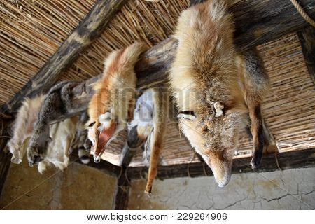 Animals Fur Hanging In Hut, Bay Of Bones On Ohrid Lake. Macedonia.