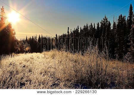 Morning Sunlight In A Hoar Frost Covered Forest.
