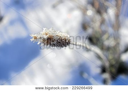 Macro View Of Hoar Frost Covering A Grass Head.