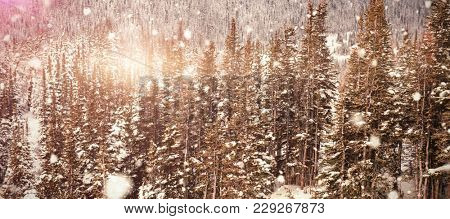 Snow falling against snow covered pine trees on alp mountain slope