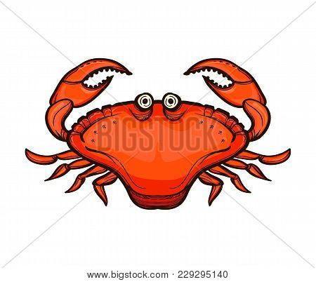 Crab Isolated On White Background. Fresh Seafood. Serrated Mud Crab. Sea Creatures In Colored Sketch