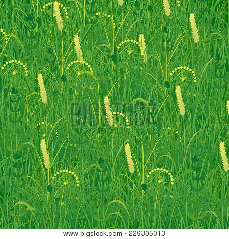 Background In The Form Of Grass. Plants Meadows And Fields. Concept Summer, Nature, Freshness, Relax