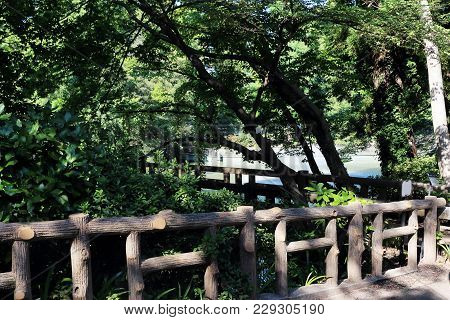 The Wooden Bridge In The Inokashira Park