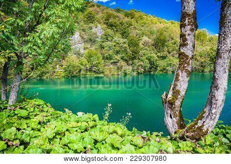 Beautiful Azure Lake In The Plitvice National Park, Croatia