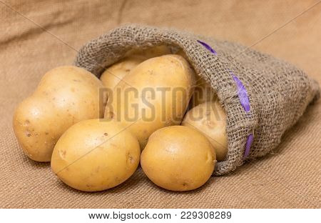 Potatos In A Sack On A Burlap Sack Background.