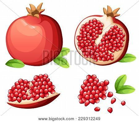 Pomegranate And Fresh Seeds Of Pomegranates. Vector Illustration Of Opened Pomegranate. Vector Illus