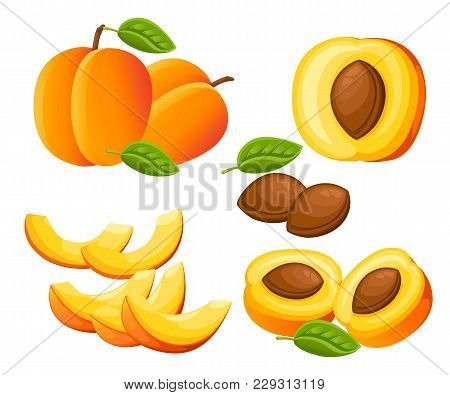 Peach And Slices Of Peaches. Vector Illustration Of Peaches. Vector Illustration For Decorative Post