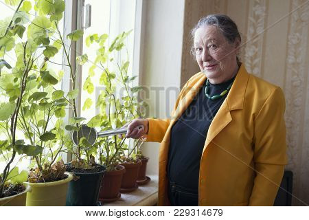 Old Lady In The Yellow Jacket At The Window Watering Houseplant, Active Ageing