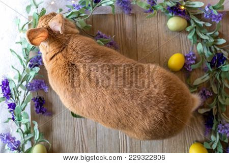 Easter Bunny Rabbit In Rufus Color On Wooden Board Surrounded By Spring Flowers, Flat Lay