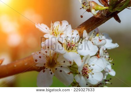 Photo Of Blossoming Tree Brunch With White Flowers On Bokeh Green Background Spring Flowering Trees