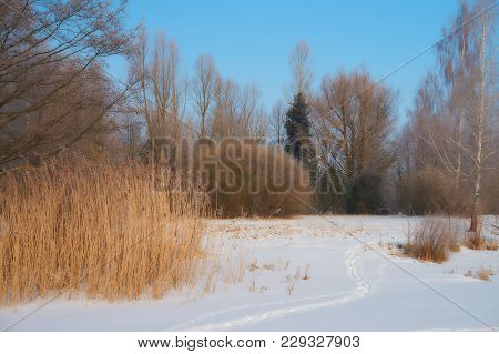 Ice And Snow Covered River, Trees, Rushes, Fallen Fields And Blue Sky With White Clouds. Cold, Snowy