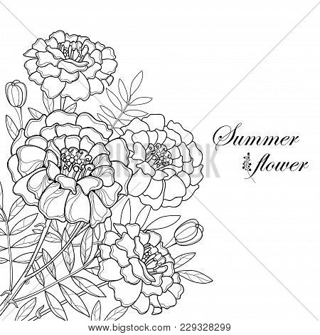 Vector Bouquet With Tagetes Or Marigold Flower, Bud And Leaf In Black Isolated On White Background.