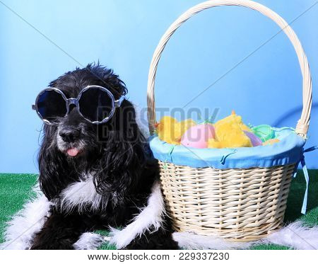 Funny Dog Portrait.