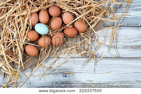 Overhead View Of Single Blue Egg With Natural Brown Raw Eggs Resting On Straw And Burlap With White